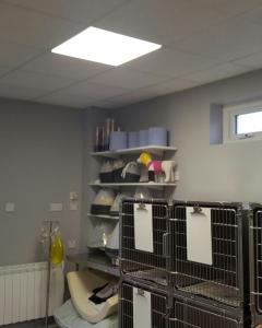 Grey Abby Veterinary Hospital - Interior Decorating 2